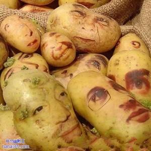 Team Potatis